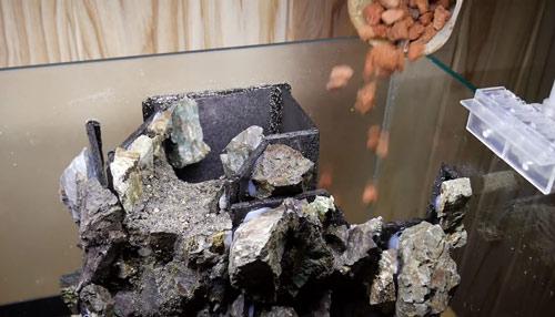 عکس ریختن سنگ رنگی در تراریوم