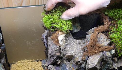 عکس پوشش گیاهی تراریوم آبی