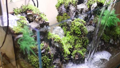 عکس ریختن آب در تراریوم آبی