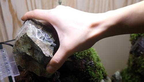 عکس قرار دادن سنگ در تراریوم آبی