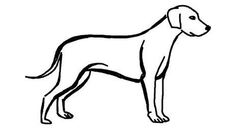 عکس آموزش نقاشی سگ هاسکی
