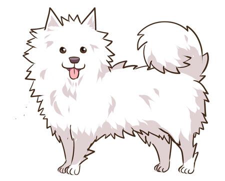 عکس آموزش نقاشی سگ پشمالو
